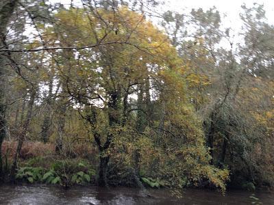 By E.V.Pita / River Anllóns to Ponteceso (Galicia , Spain) Fall 2012