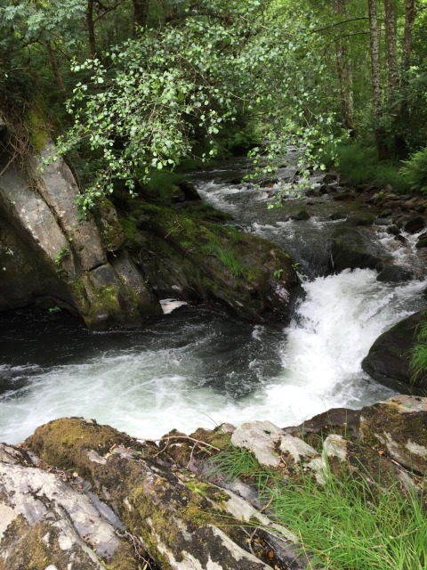 Spain, Marronda forest and the Eo River   by E.V.Pita (2015)  http://evpita.blogspot.com/2015/06/spain-marronda-forest-and-eo-river.html   Fraga de Marronda - río Eo (Baleira, Lugo)  por E.V.Pita (2015)